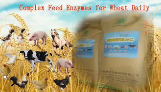 China Yellowish Powdered Complex Poultry Feed Enzymes For Wheat Daily Diet Szym-nutriWH supplier