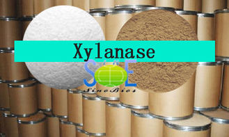China Animal Feed Additives Light Yellow Xylanase Enzyme Powder 10,000u/g Szym-XY10FE supplier