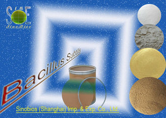 China Nutritional Bacillus Subtilis Probiotic Feed Additives for Poultry SEM-BS200BI supplier