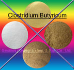 China Brown 10BI CFU/G Clostridium Butyricum Feed Probiotics For Animals SEM-CB10BI factory