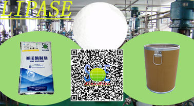 China Industrial Alkaline Lipase Enzyme Supplement For Detergent Szym-LIP20DE distributor