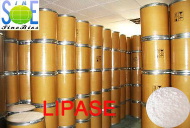 China White To Creamy Powdered Enzyme Lipase In Food 30000u/g Szym-LIP30BA distributor