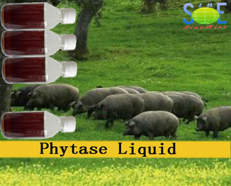 China Phytase Animal Feed Liquid Enzymes In Animal Nutrition 20000u/mL Szym-PHY20L distributor
