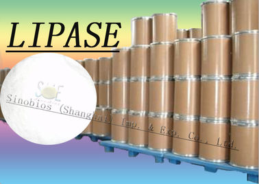 China 20000u/g Lipase Enzyme Supplement For Bread / Flour / Noodles Szym-LIP20BA distributor